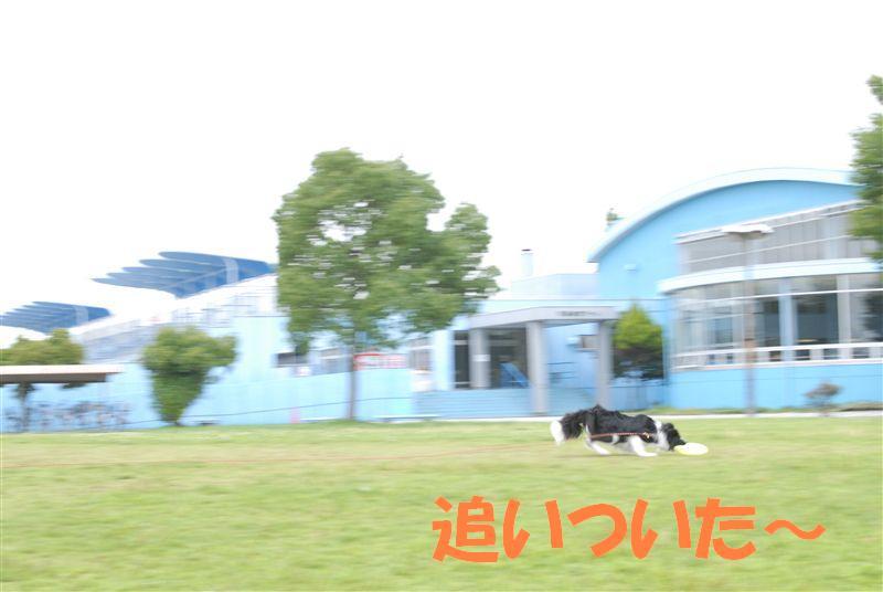 Dsc_0170_r1