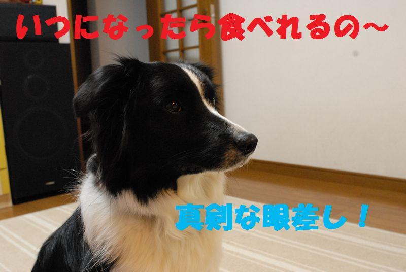 Dsc_0420_r1