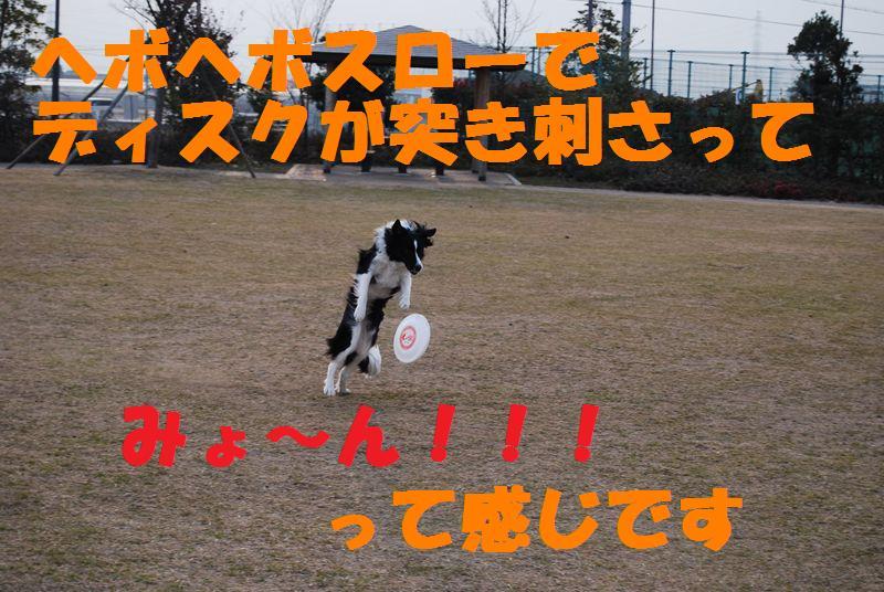 Dsc_1123_r1_2